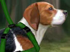 Play Beagle Training at GirlGamey.Com
