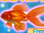 Play Shining Gold Fish